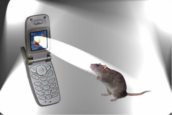 Do Cell Phones Cause Cancer? - The Skeptics Society